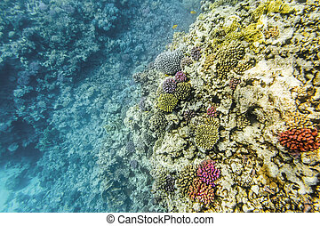 Coral Reef under water of the Red Sea in Egypt