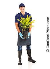 gardener holding a plant - portrait of handsome gardener...