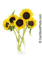 Sunflowers in a vase isolated on white
