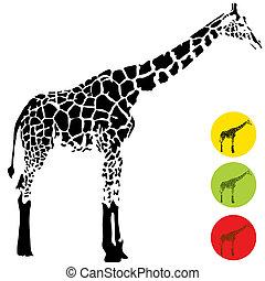Giraffe Profile - An image of a giraffe.