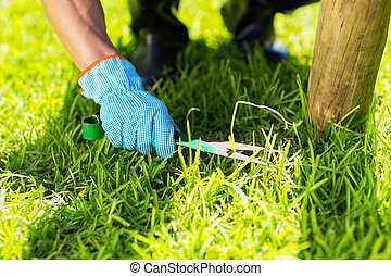 lawn trimming - close up of gardener lawn trimming