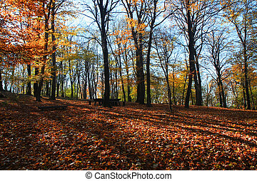Forest on the mountain Avala close to serbian...