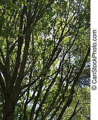 Fruehlingsbaum - Tree in Spring