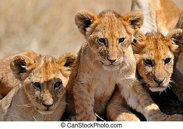 Lion cubs on the Serengeti in Tanzania