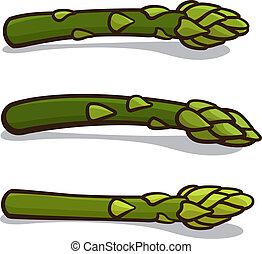 Asparagus - Vector illustration of asparagus isolated on a...