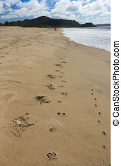 Footprints on a deserted beach - Footprints in the sand on a...