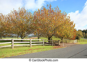 Autumn countryside - Beuatiful trees with a variety of...