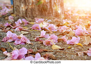 Pink trumpet flowers and dry leaves in the summer