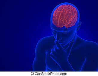 Human brain in X-ray. 3d illustration. Contains clipping path