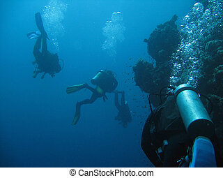 Diving - Diver and fishes