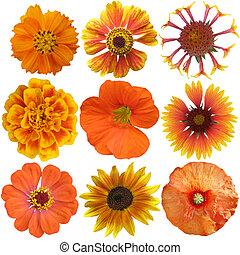 Set of Orange  Flowers Isolated on White