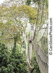 Canopy walkway in Kakum National Park, Ghana