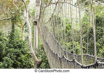 Canopy walkway in Kakum National Park, Ghana - Canopy...