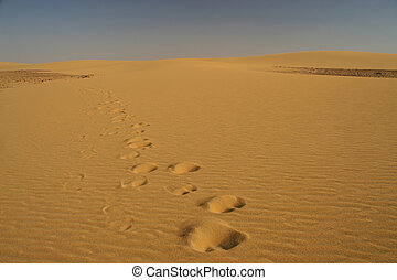 Trails in the desert - Camel traces in the desert