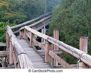 Amazon Trail Ecotourism Forest - Amazon elevated trail path...