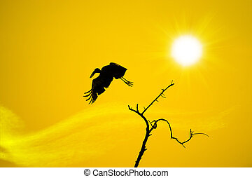 Birds on branches and sunshine
