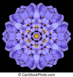 Blue Mandala Flower Kaleidoscope Isolated on Black - Blue...