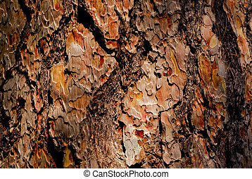 Tree bark - The bark of pine tree