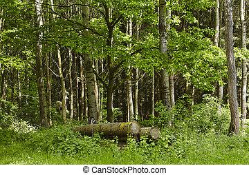 Broadleaf forest - logs - Logs at a broadleaf forest taken...