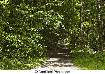 Broadleaf forest - forest path - A forest path into a...