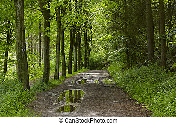 Broadleaf forest - forest path - A forest path after a...