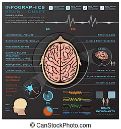 Brain And Nervous System Medical Infographic Infochart...