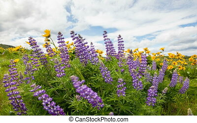 Wildflowers Spring Season Timelapse - Lupine and Yellow...