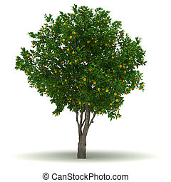 Single Orange Tree - Single Citrus Sinensis Tree isolated...