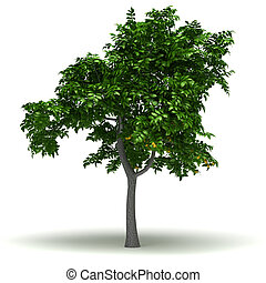 Single Lemon Tree - Single Citrus Limon Tree (isolated white...