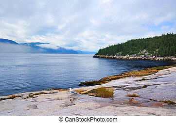 Beautiful coastline with gulls and misty high mountains,...