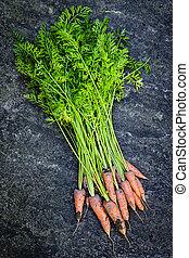 Bunch of carrots fresh from garden