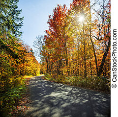 Fall forest road - Curving road in a colorful fall forest...