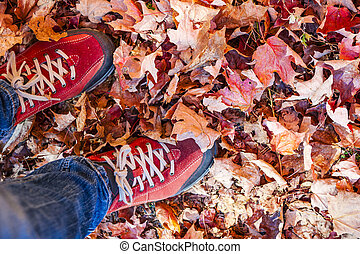 Red shoes standing among fall leaves - Red shoes standing in...