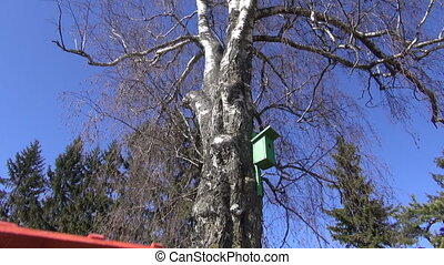 wooden ladder on birch tree in spring near old nesting box