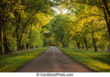 Forest road Landscape - Asphalt road in the sunset green...