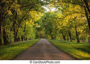 Forest road. Landscape. - Asphalt road in the sunset green...