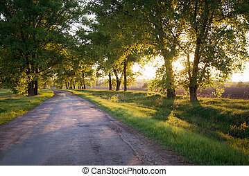 Forest road. Landscape. - Asphalt road in the sunset green...