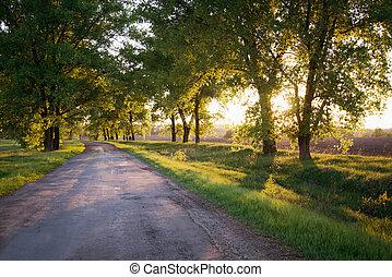 Forest road Landscape - Asphalt road in the sunset green...