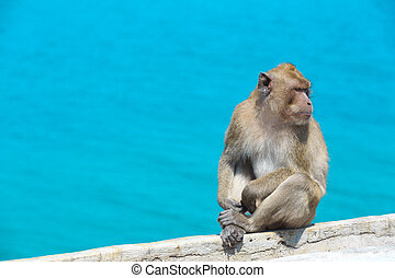 Thai monkey at a sea