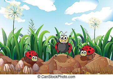 Three ladybugs above the rocks - Illustration of the three...