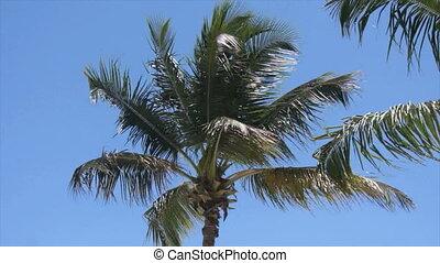 dominican summer - bay, palm, palm leaf, leaf, beach,...