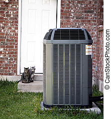 Air conditioner and two cats - Backyard with air conditioned...