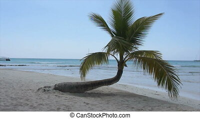 dominican summer - bay, palm, palm leaf, leaf, beach,...