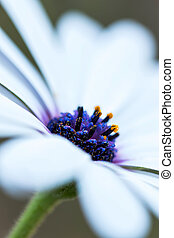 Detail of a daisy plant