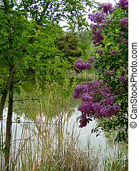 Lilacs - Fragrance of Spring - The beautiful color and...