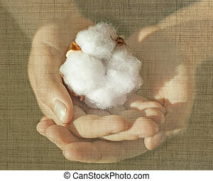 cotton 1oo% creative concept - child hands holding cotton...