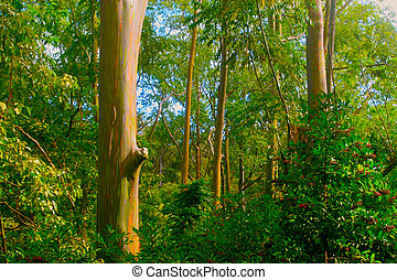 Rainbow Eucalyptus Trees - a group of colorful rainbow...