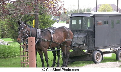 mennonites cart - footage of mennoniteamish horse and buggy