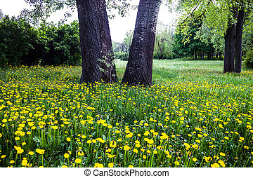 Trees surrounded by blooming yellow dandelions - Trunks of...