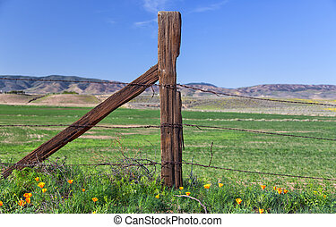 Upright Weathered Fence Post in Antelope Valley Poppy Field